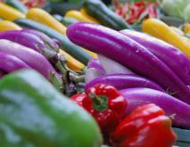 蔬菜种类大全资料下载