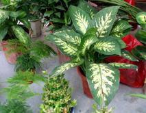 十大净化空气的室内植物排名