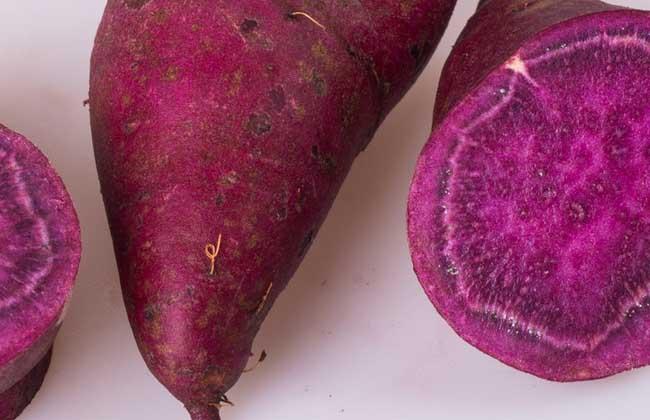 紫薯是转基因食品吗?
