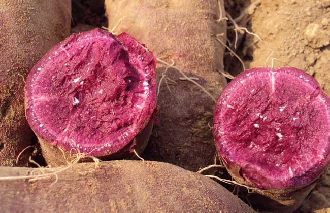紫薯和红薯有什么区别