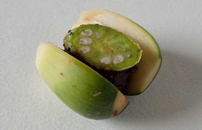 槟榔怎么吃最好