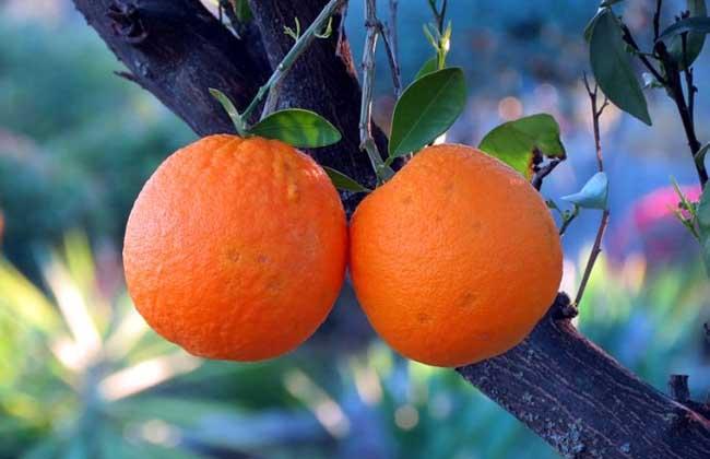 南方适合种什么水果?
