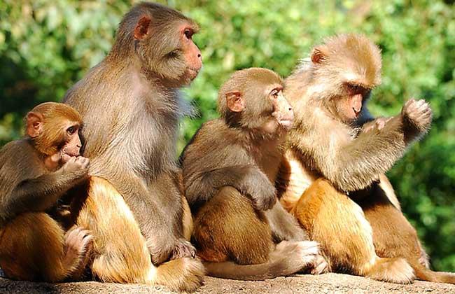 猴子的尾巴有什么作用