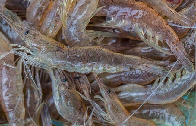 河虾吃什么食物