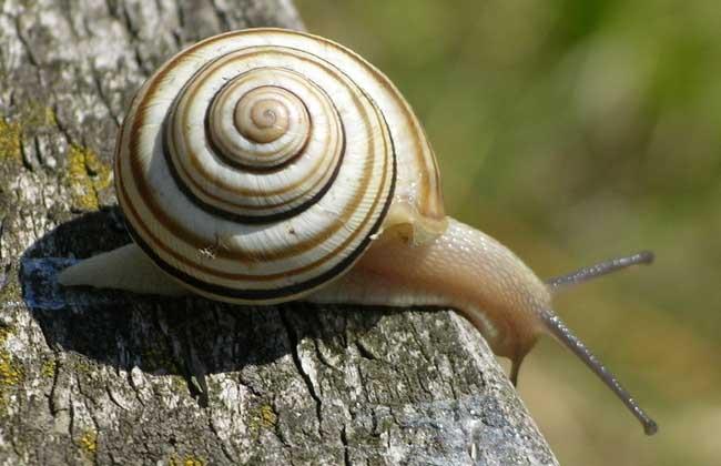 蜗牛吃什么食物?
