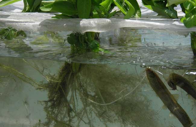 养殖泥鳅投资多少钱