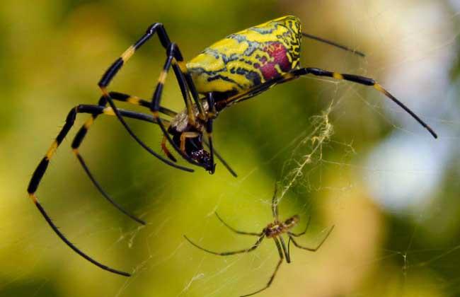 蜘蛛吃什么食物