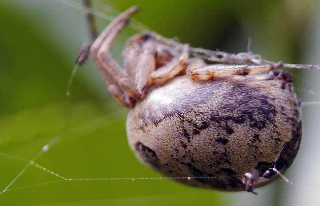 蜘蛛的天敌是什么