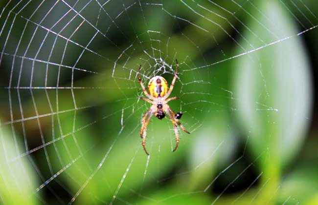 蜘蛛结网的原因