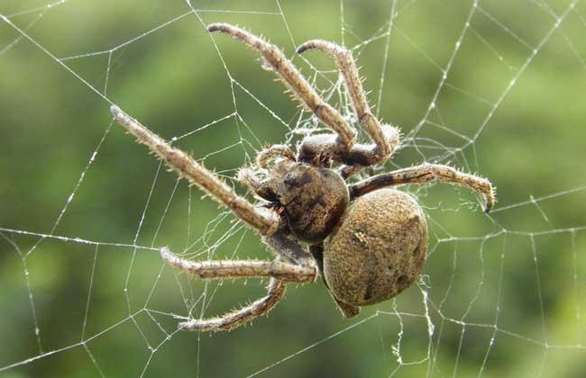 蜘蛛的食性特征