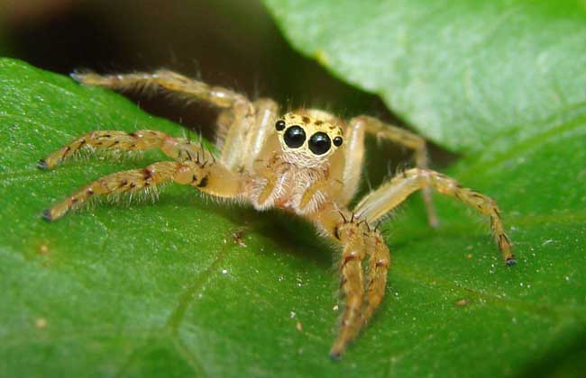 蜘蛛的常见种类
