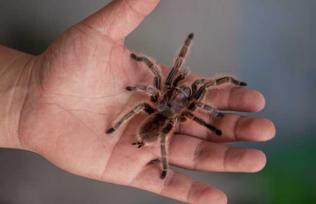bt搜索蜘蛛