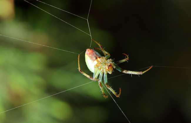 蜘蛛结网方法