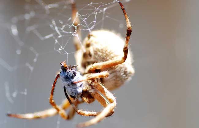 蜘蛛的生活习性
