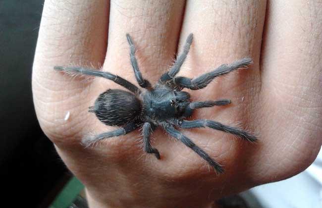 蜘蛛养殖技术