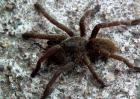 世界十大最恐怖毒蜘蛛