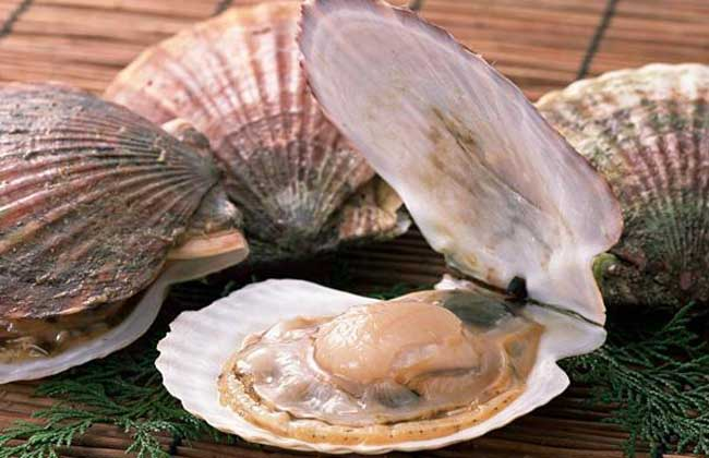 河蚌的营养价值