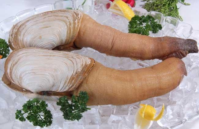 象拔蚌的营养价值