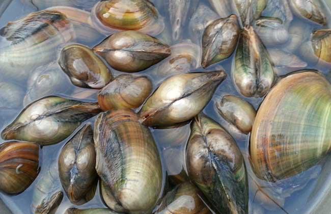 孕妇能吃河蚌吗?
