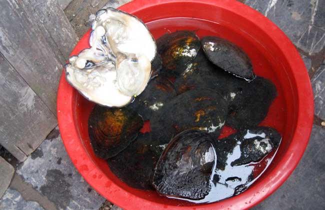 孕妇能吃河蚌吗