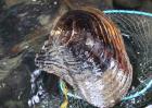 河蚌养殖技术视频