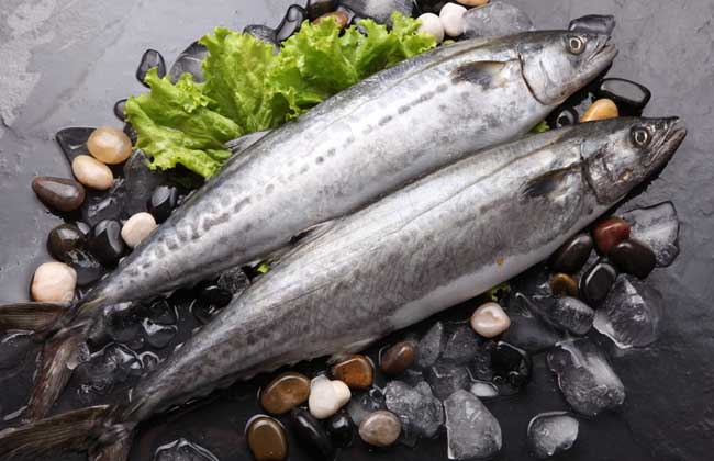 鲅鱼能人工养殖吗