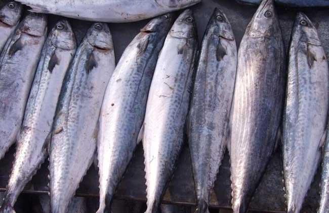 鲅鱼的做法大全