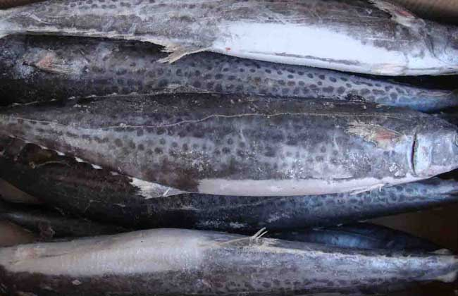 鲅鱼价格行情