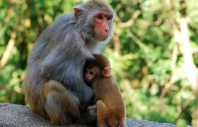 养猴子犯法吗?