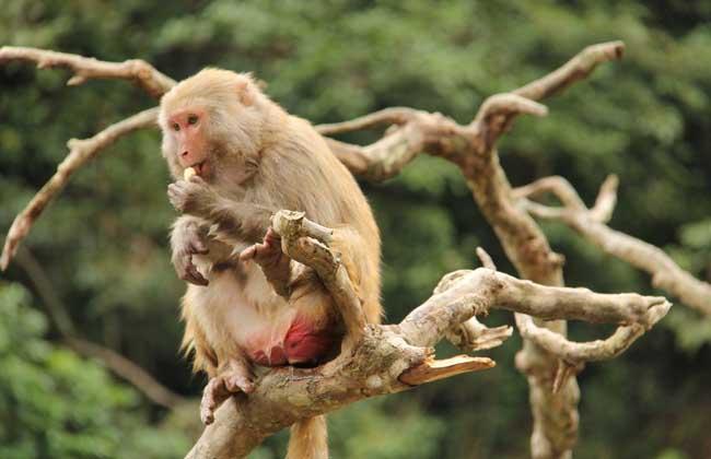 国家二级保护猴子