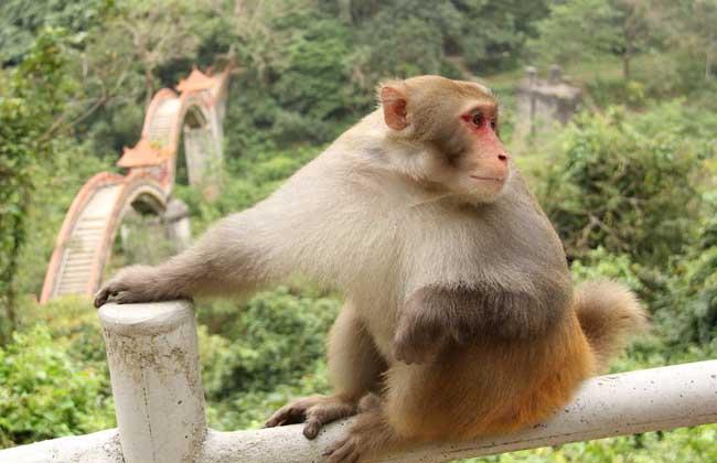 猴子吃什么食物