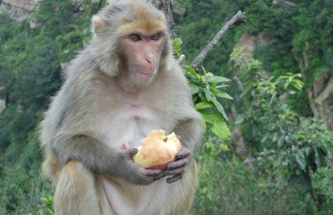 是世界上最丑怪的猴子