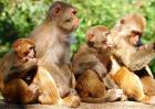 猴子种类图片大全