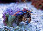 寄居蟹能活多久?