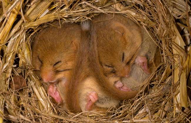 冬眠的动物都有哪些