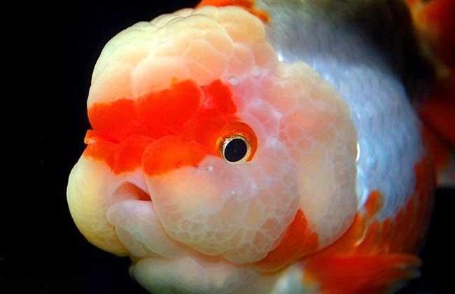 家里养鱼多久换一次水