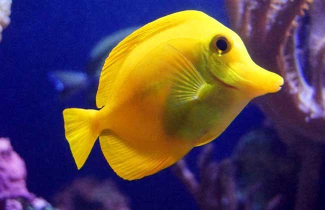 没有水的鱼能活多久?