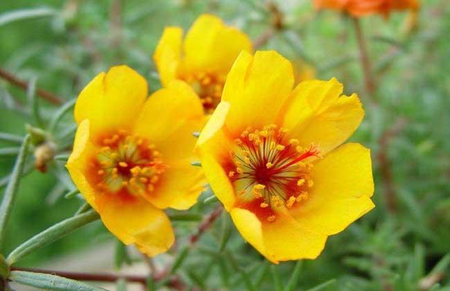 《常见的一年生花卉有哪些?》