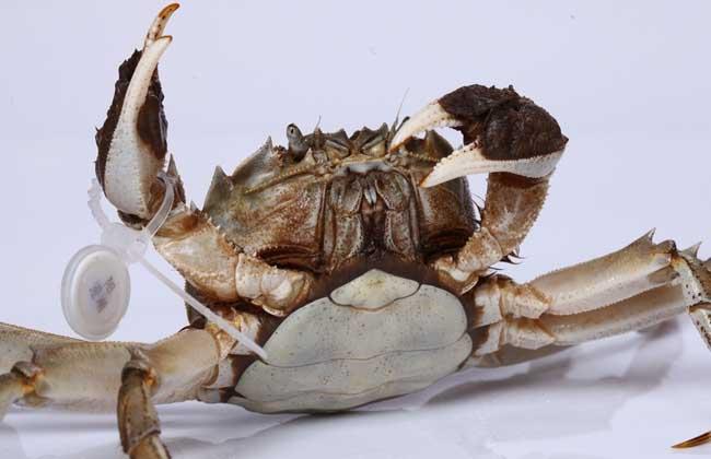 大闸蟹养殖技术