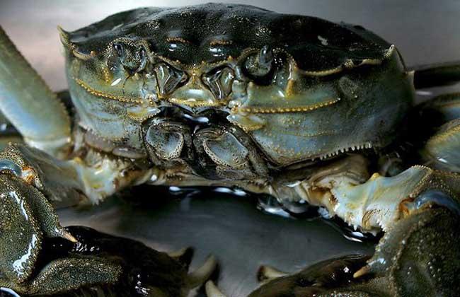 大闸蟹怎么保存