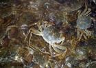 大闸蟹养殖技术视频