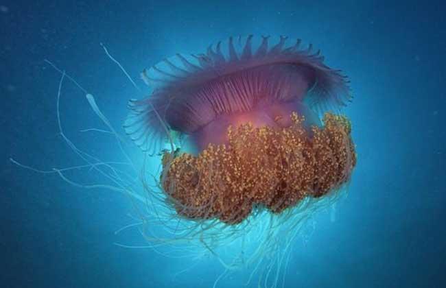 海蜇有毒吗