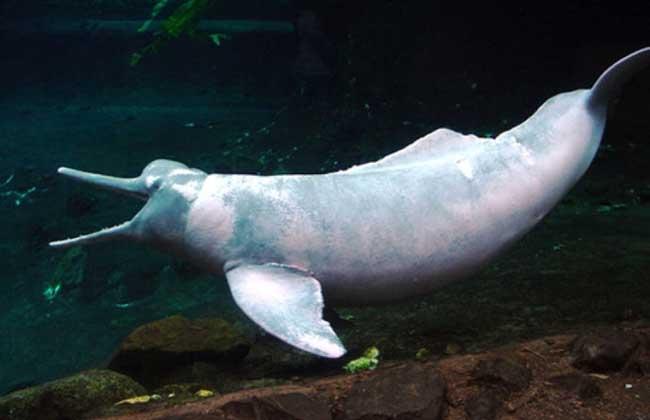 河豚和海豚的区别