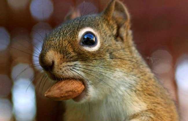 松鼠的生活习性