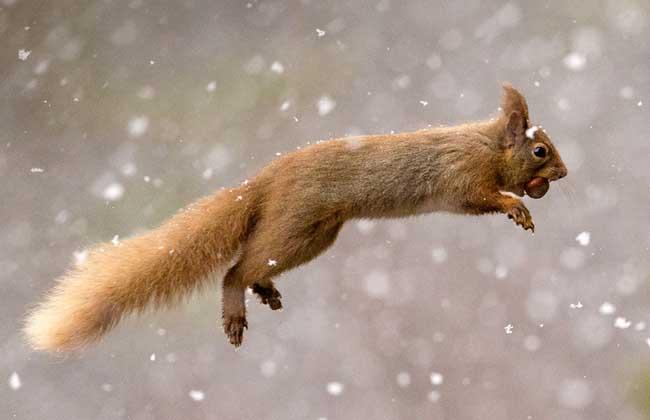 松鼠的尾巴有什么作用