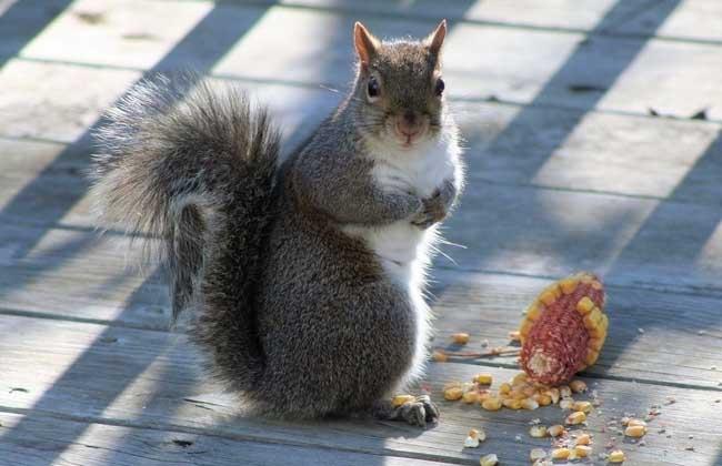 松鼠吃什么食物