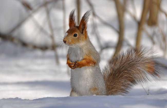 松鼠的种类图片 - 农业图鉴