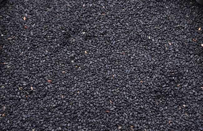 黑芝麻怎么吃最好