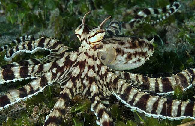 鱿鱼和章鱼的区别