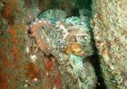 章鱼是什么动物?